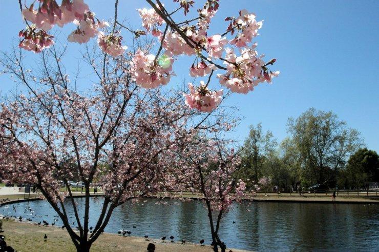 lake balboa 2